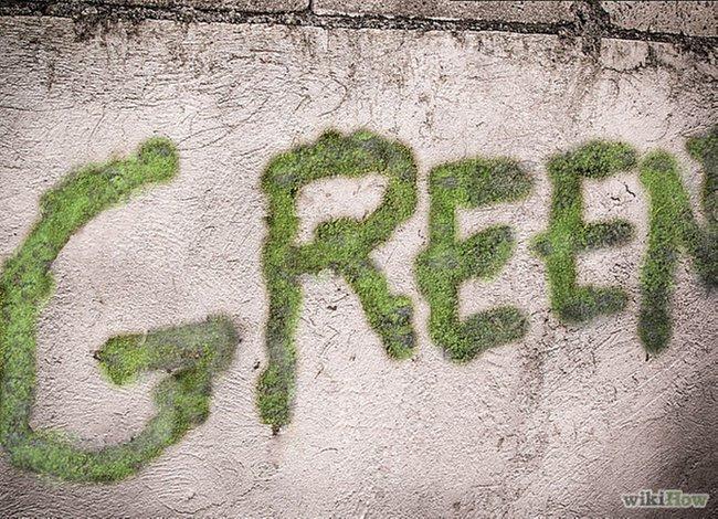 growing-green-moss