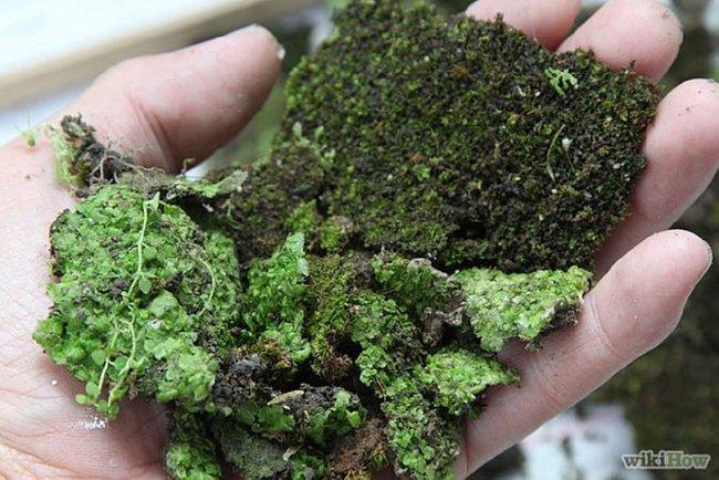 handful-of-moss