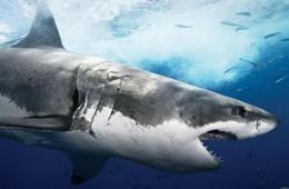20 τρόποι να πεθάνεις (εκτός από καρχαρία)
