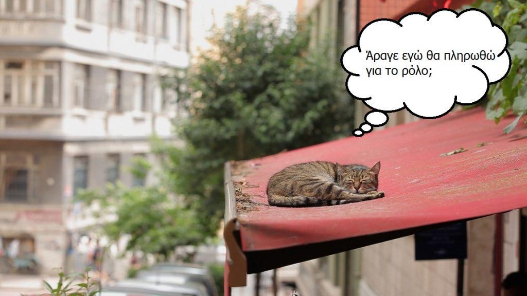 kedi-napping-thoughts