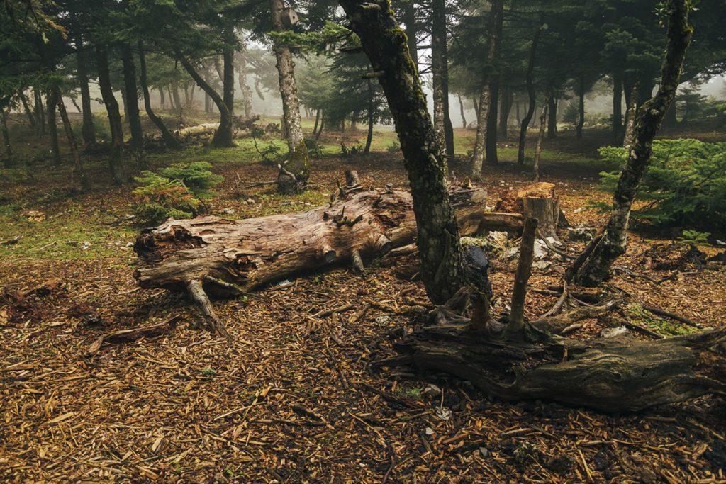 Το δάσος της Πάρνηθας