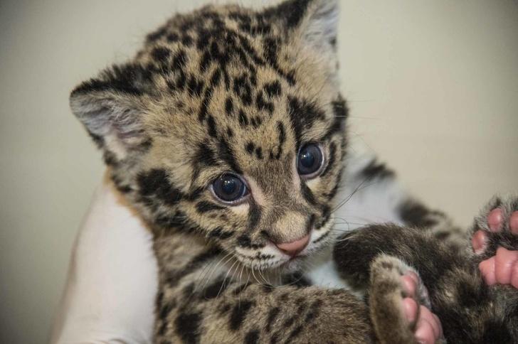 18 νεογέννητα ζωάκια που θα σε συγκινήσουν...και όχι άδικα!
