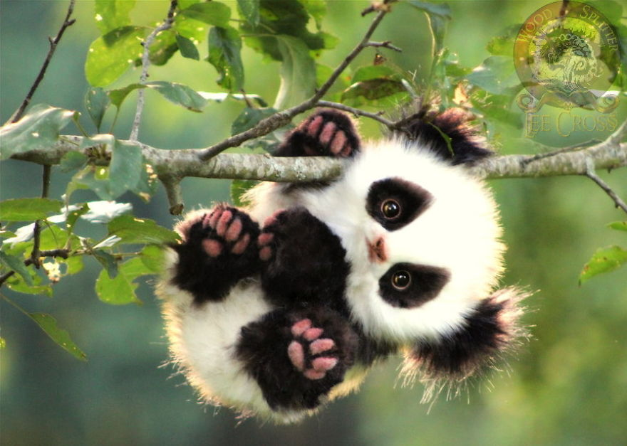 νεογέννητα ζώα