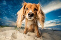 20 πορτρέτα ζώων που θα σε ξετρελάνουν!
