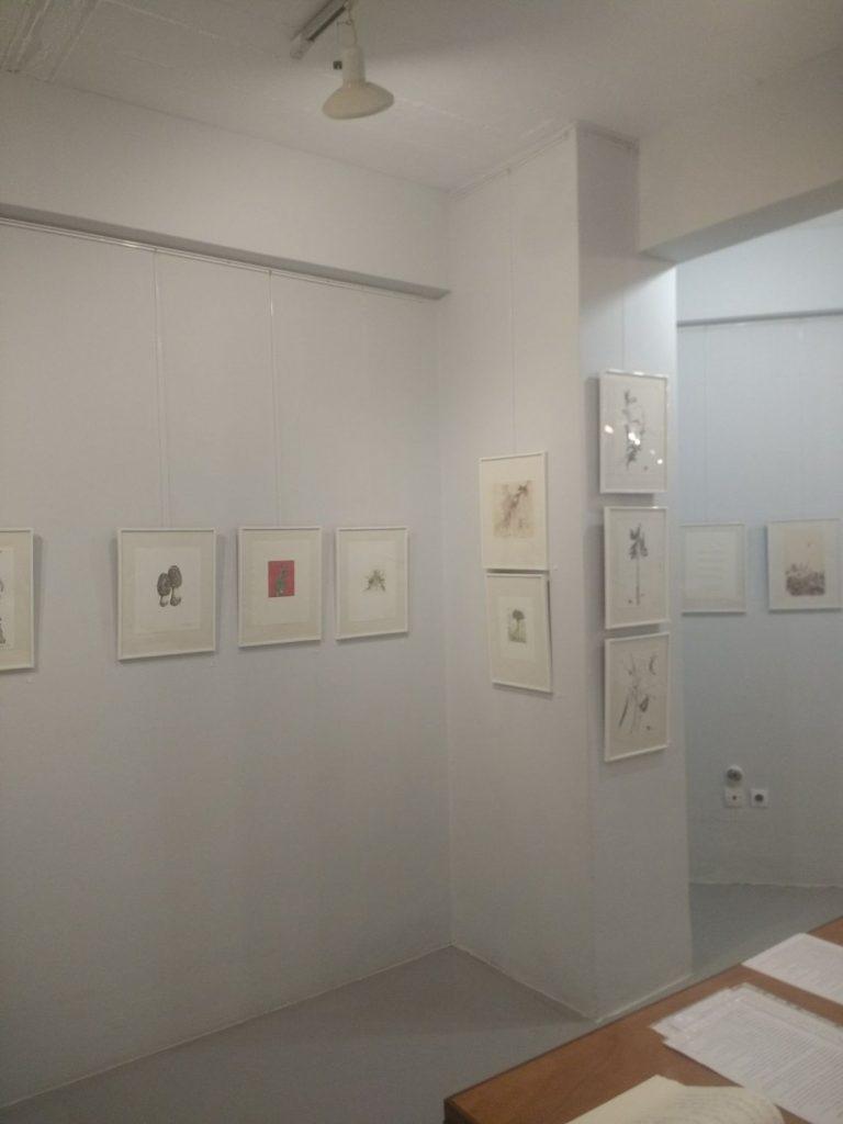 Herbarium Ι – Φυτολόγιο Ι